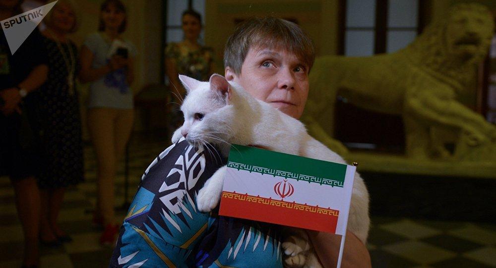 Mèo Achilles dự đoán trận Iran - Morocco - Bóng Đá