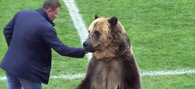 Giật mình với hình ảnh gấu