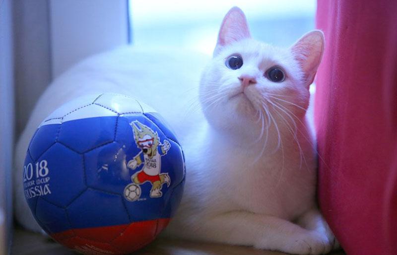 Cả mèo Achilles, robot Baxter đoán chính xác Nga thắng Saudi Arabia - Bóng Đá