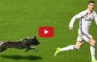 Những khoảnh khắc hài hước khi động vật chạy vào sân bóng