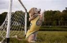 Chú chó bắt bóng siêu giỏi từng đi vào kỷ lục Guinness