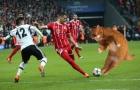Chú mèo đại náo trận đấu của Bayern Munich