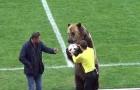 Giật mình với hình ảnh gấu 'bàn giao' bóng cho trọng tài ở giải VĐQG Nga