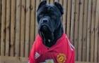 Điểm danh những chú chó to 'khủng bố' của sao sân cỏ