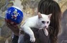 Cả mèo Achilles, robot Baxter đoán chính xác Nga thắng Saudi Arabia