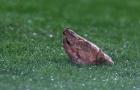 Siêu kinh điển: Đầu lợn cho Figo và Mourinho móc mắt Tito