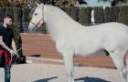Sergio Ramos có dịp 'nở mày nở mặt' vì... ngựa