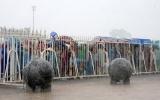 Việt Nam vô địch, số phận 40 quả cầu đá ở Mỹ Đình được định đoạt