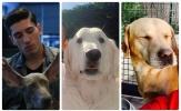 Đội hình chó cưng nổi tiếng nhất thế giới bóng đá