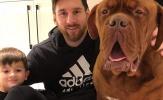 Giật mình với chú chó 'khổng lồ' Hulk của Lionel Messi