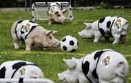 Điểm tin hậu trường 17/5: M.U lỗ nặng vì 'vật thể lạ'; Huyền thoại Barca ví sao Real như gia súc