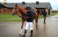 Từ bỏ bóng đá, Michael Owen quyết làm nài ngựa chuyên nghiệp