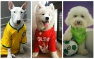 Đáng yêu hết cỡ với World Cup 2018 phiên bản cún cưng
