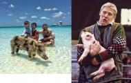 Cầu thủ chụp ảnh với lợn: Người thần thái kẻ khổ não