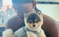 Daniel Sturridge treo thưởng 'khủng' để tìm chó cưng