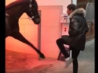 Độ 'lầy' của Thomas Muller khi gặp bạn ngựa