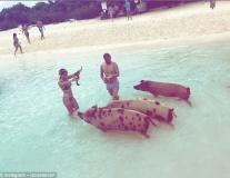 Sao nghỉ Hè: Costa... chơi dơ; Isco tắm biển với những chú lợn