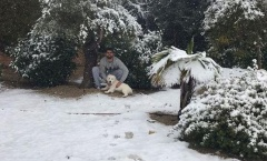 Thách thức trời rét, Diego Costa dẫn chó cưng đi dạo