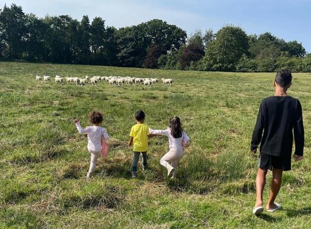 Ronaldo rời siêu biệt thự vì ... đàn cừu - Bóng Đá